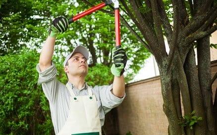 Onderhoud van een tuin gaat het gehele jaar door. Verschillende beplantingen vereisen verschillende snoeimomenten.