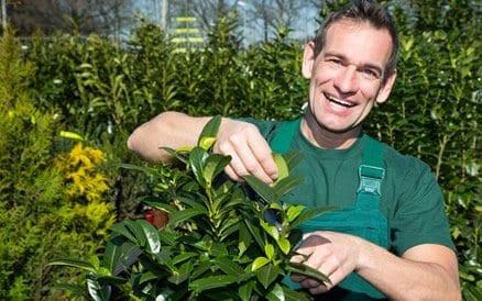 Een hovenier doet niet alleen de aanleg van een tuin, maar adviseert, onderhoudt en levert ook planten, bomen en struiken vaak goedkoper dan een tuincentrum.